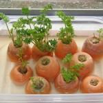 Mais verdura: 15 alimentos que você pode replantar